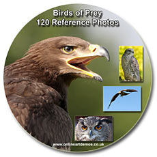 bird of prey reference photos
