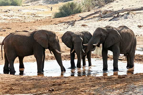elephants-waterhole