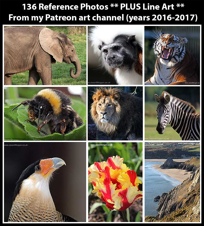 Artists Reference Photos – Mix 2 (from Patreon) | Wildlife